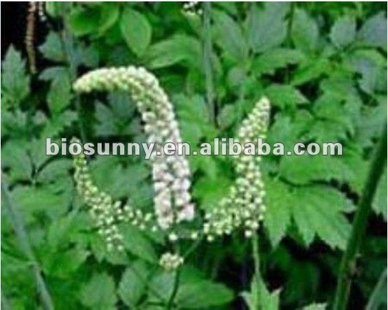 Black Cohosh P.E Cimicifugoside 8%