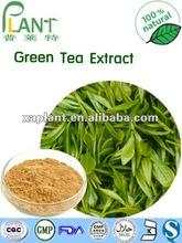 GMP Manufacturer Natural EGCG 98% Powder Green Tea Extract