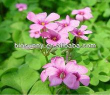 High quality Red clover P.E. Isoflavones, BiochaninA, Formononetin