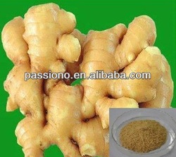 Best natural Ginger Extract 10:1 from Ginger Root in stock