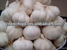 hotsale fresh garlic