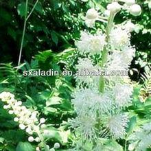 Black Cohosh P.E.Triterpene glycosides 2.5% ,5%, 8% (HPLC)