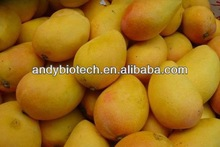 100% Natural Plant Extract African Mango P.E. 20:1