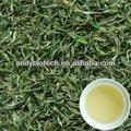 Alta qualidade extratosvegetais cháverde p. E e. 95% polifenóis, 45% egcg, 6-13% cafeína