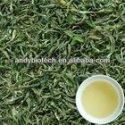 High Quality Plant Extract Green Tea P.E. 95% Polyphenols, 45% EGCG, 6-13% Caffeine