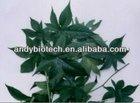 High Quality Plant Extract Vine Tea P.E. 90% Dihydromyricetin