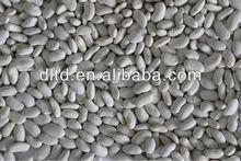 white kidney bean crop 2012