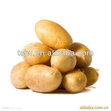 crop patato