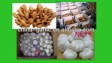Fresh Garlic in Cold Storage 5p 30LBS/Carton To USA Market