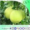 100% Herb extract natural Belladonna extract Hyoscyamine