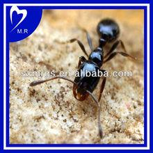 High Quality Black Ant Extract (ISO9001,KOSHER,HALAL,FDA)