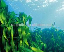 GMP Manufacture Bladderwrack Seaweed Kelp Extract 60:1 10% Iodine