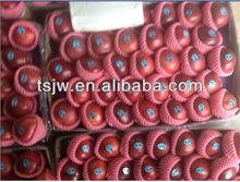 New crop red apple Huaniu apple