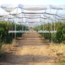 USP36 grade Raspberry Ketone supply worldwide delivery, low price quality guarantee