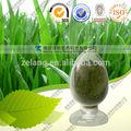 orgânica cevada grama de pó