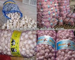 cold store fresh garlic