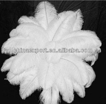 natural ostrich feathers for party decorative 40-45cm wholesale price