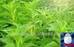 High quanlitiy Stevia Leaf Extract steviosides 95%98%