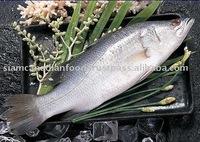 Vietnam High Quality Edible Sea Bass