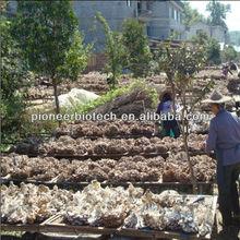 Pure Agaricus blazei polysaccharide in bulk supply