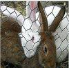 Chicken wire netting / rabbit wire mesh