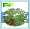 100% Natural Tuber Onion Seed P.E./Semen Allii Tuberosi Extract