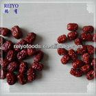 Dates fruit importers