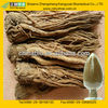 Best Selling Angelica Sinensis Extract Dong Quai Extract with Ligustilide and Ferulic Acid on sale