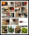 Nocciola e mandorle macchina raccolta( 0086- 13837171981)