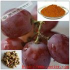 GMP 95%Proanthocyandin organic grape seed extract powder