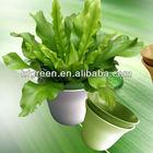 Plant Fiber eco friendly garden flower pots/planter
