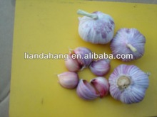 Certified GAP/ KOSHER/ HALAL New Crop Chinese Red Garlic