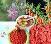 fresh/dried Goji Berry/organic Gojiberry
