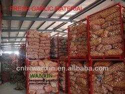 2013 natural garlic