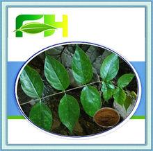 100% Natural Ramulus Uncariae Cum Uncis Extract