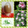 Functional And Best Quality Periwinkle Extract