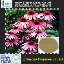 High Quality 4% Polyphenols Echinacea Purpurea Extract
