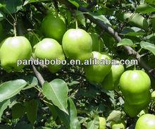 Fresh Crisp Early Su Pear