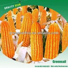 granja de la planta de suministro de semillas de maíz para el cultivo