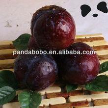 Sweet and slight sour fresh Black Plum Fruit
