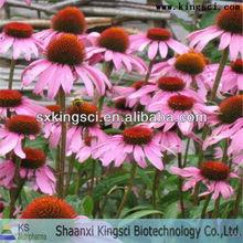 Echinacea Purpurea Extract of polyphenols