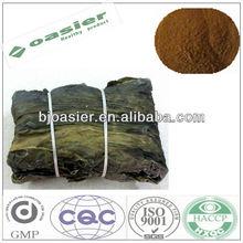 Natural GMP hot sale fucoidan kelp seaweed extract