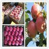 2014 new crop Fresh Red Qinguan Apple Fruit