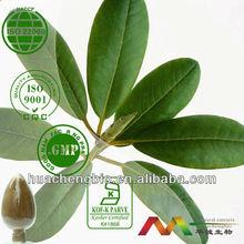 Natural 25%-75% Ursolic Acid Loquat Leaf Extract