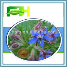 Spot Supply Natural Borage Herb P.E.