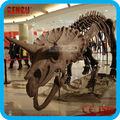 formato originale di fossili di dinosauro per la vendita