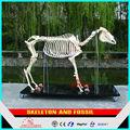 De fibra de vidrio esqueleto Animal de fibra de vidrio caballo esqueleto fósil