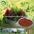 Pure grape seed extract opc95% GMP