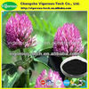 100% Natural Herb extract red clover leaf extract isoflavons 8%-80%