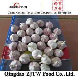 chinese fresh garlic price , export to indonesia